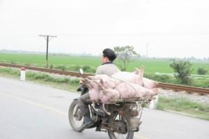 Tierschutz oder Tierschmutz?
