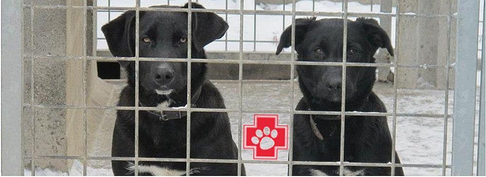 NRW: Städte rüsten gegen ehrenamtlichen Tierschutz