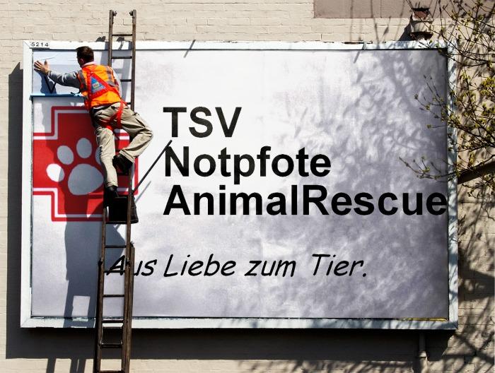 Unsere Notpfoten bei 'Tiere suchen ein Zuhause'