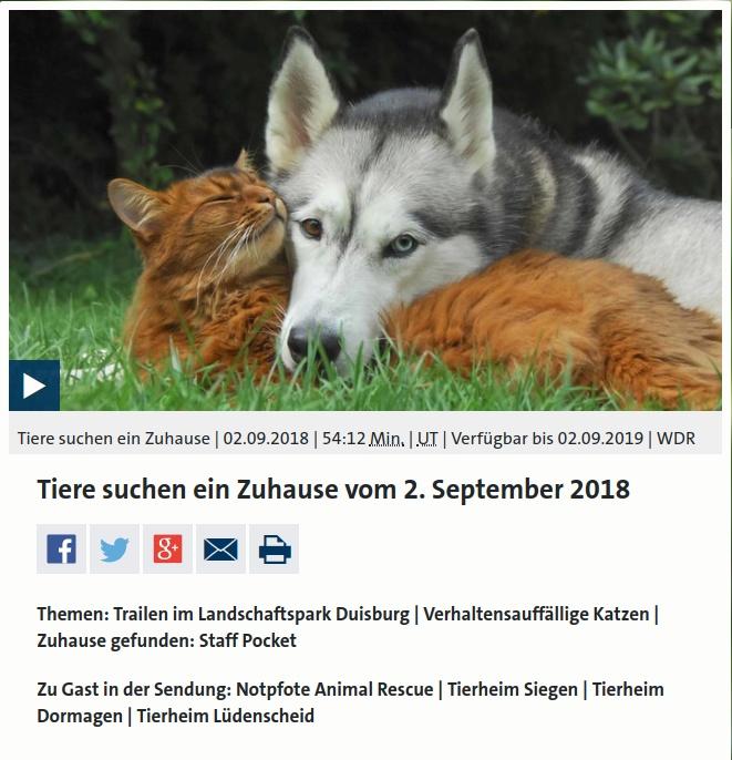 Titel Tiere suchen ein Zuhause WDR Fernsehen September 2018