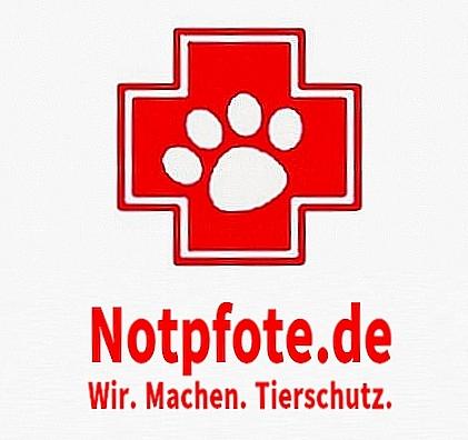 Shelter Dogs - Europas vergessene Seelen