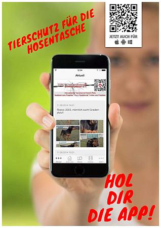 Hol Dir die Notpfote-App!