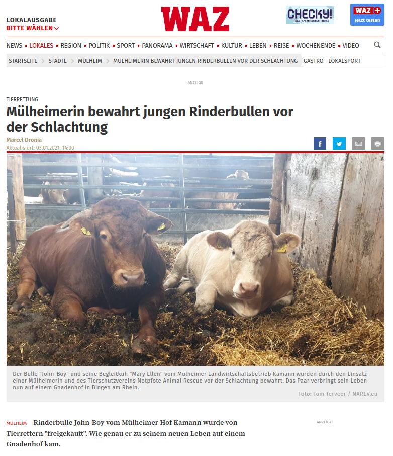 muelheimerin-bewahrt-jungen-rinderbullen-vor-der-schlachtung