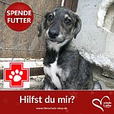 TSV Notpfote Animal Rescue e.V.