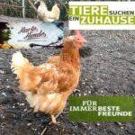 Notpfote Gefieder-Tierheim