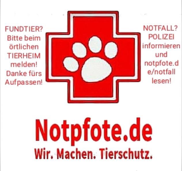 Tier-Notruf und Erste Hilfe bei Fundtieren