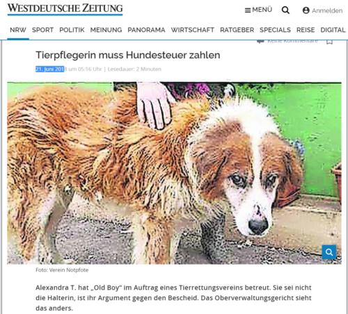 Urteil Hundesteuer