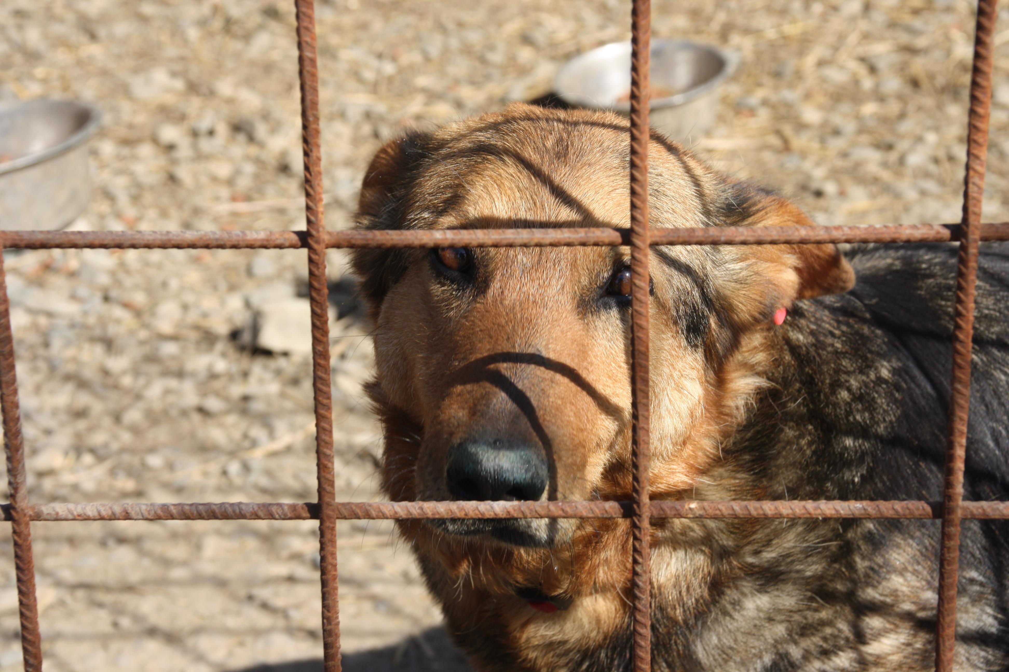 Shelter Dogs – Europas vergessene Seelen