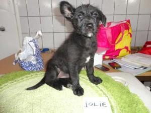 JOLIE 4