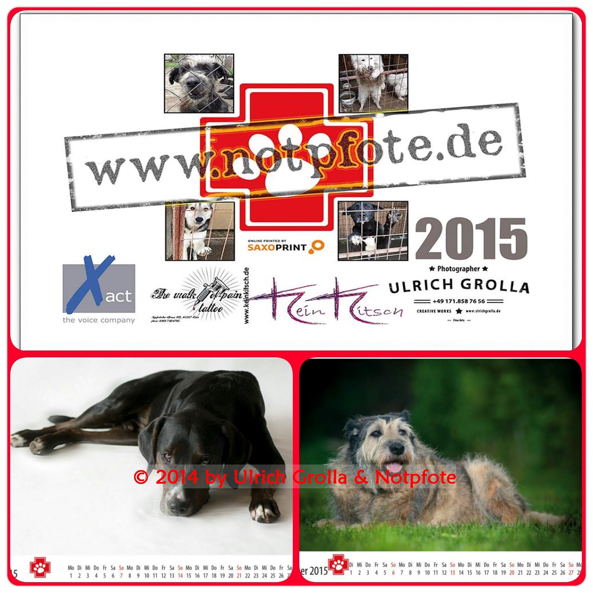 Notpfoten-Kalender 2015 jetzt bestellen!
