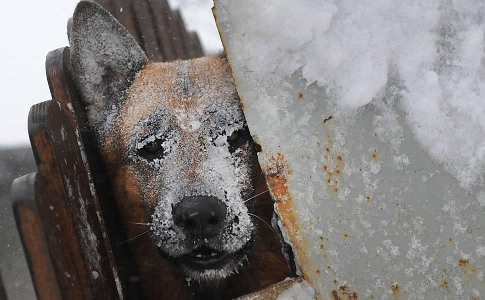winter im shelter
